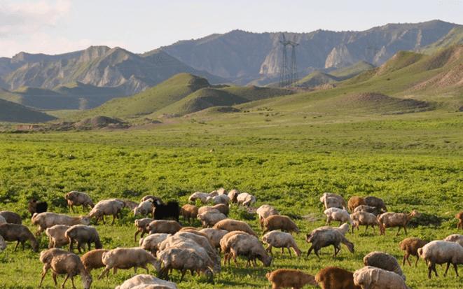 РУ Почему посетить Азербайджан? 3